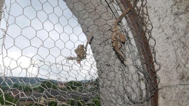Odstránili sme pascu na netopiere v kostolnej veži